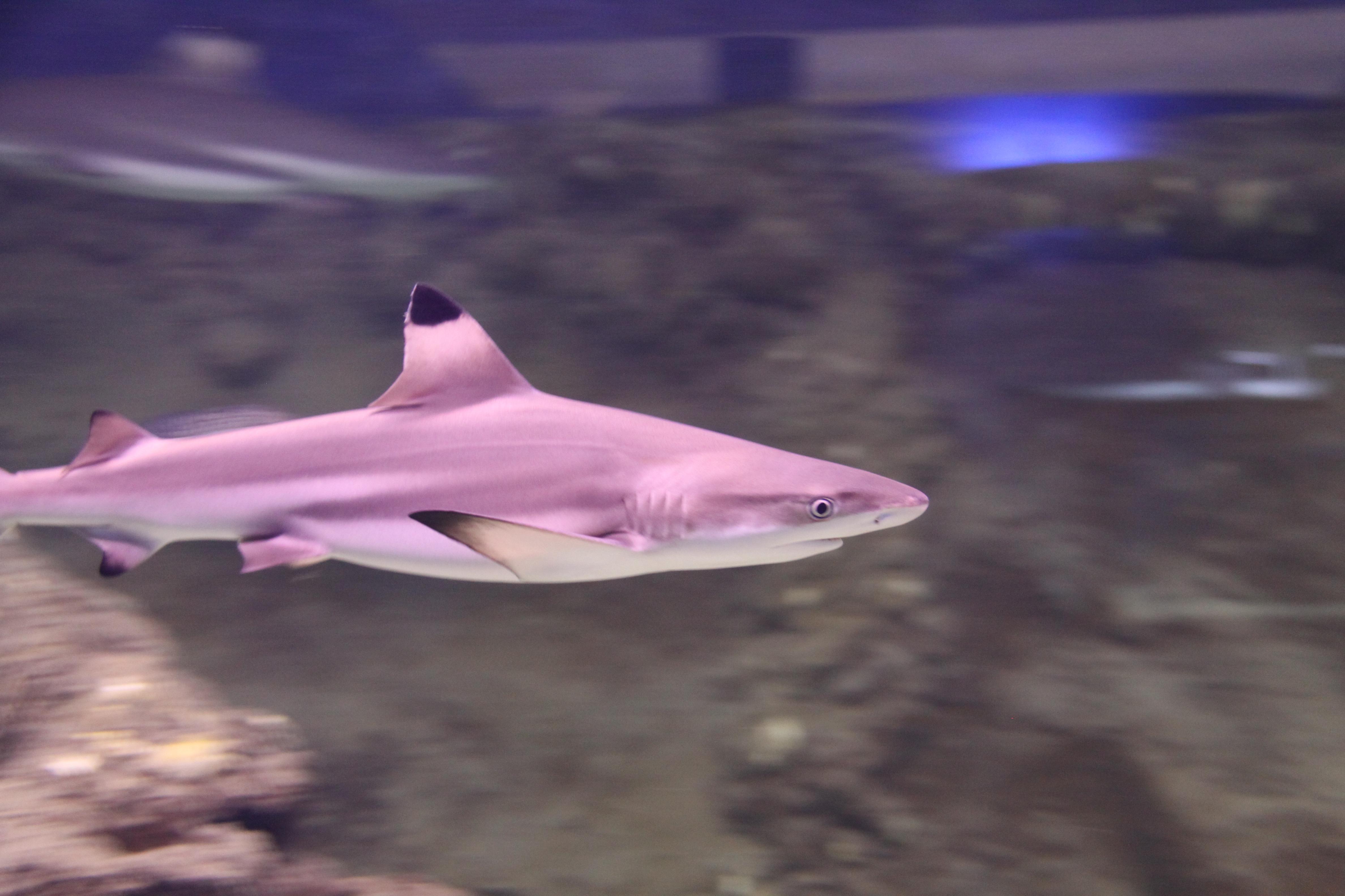 Mondo marino aquarium musei di maremma for Acquario marino